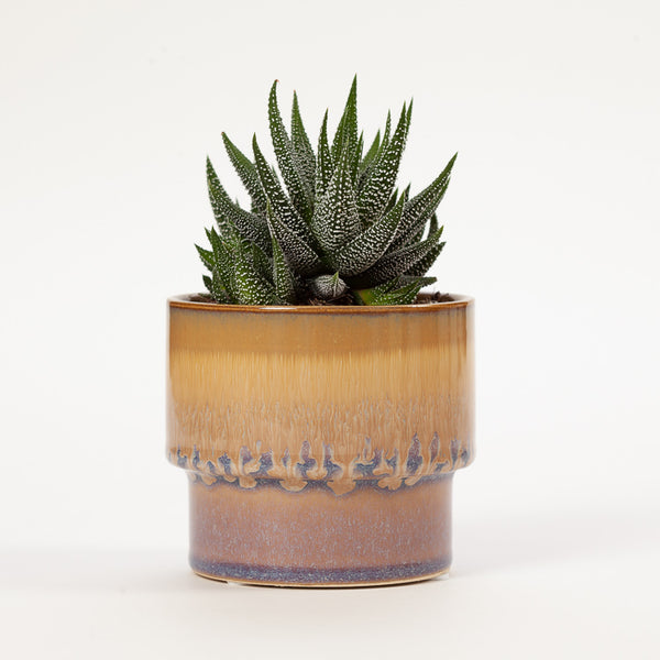 Product shot: Bloomingville Brown Blue Drip Stoneware Flowerpot with a plant in it