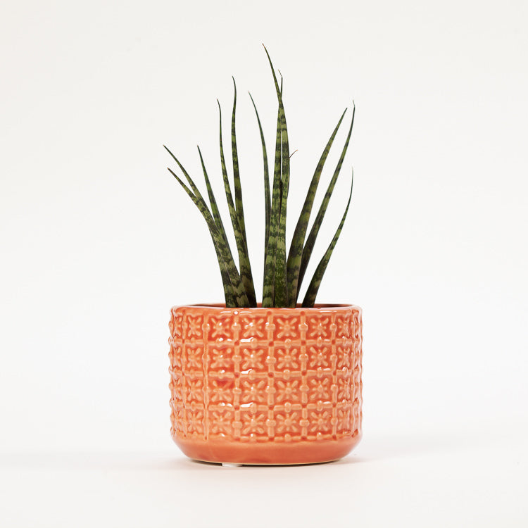 Product shot: Bloomingville Small Orange Textured Stoneware Flowerpot with a Sansevieria plant