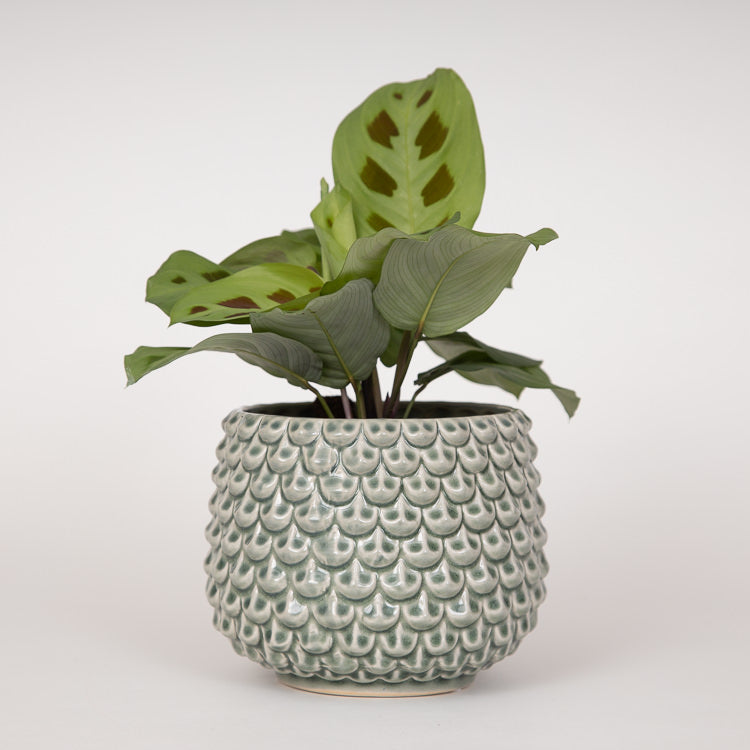 Bloomingville Green Ceramic Stoneware Flowerpot - with plant