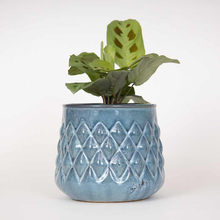 Bloomingville Blue Ceramic Stoneware Flowerpot - with plant