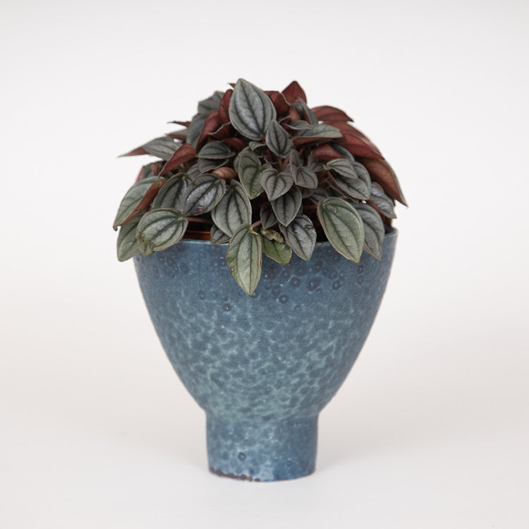 Bloomingville Green Tapered Ceramic Stoneware Flowerpot - with plant