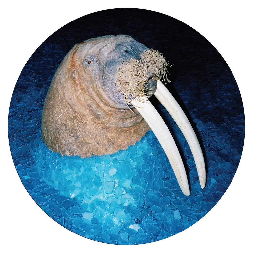 Tross 'The Walrus EP' - Cargo Records UK