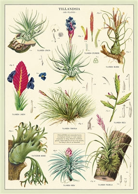Air Plants Poster