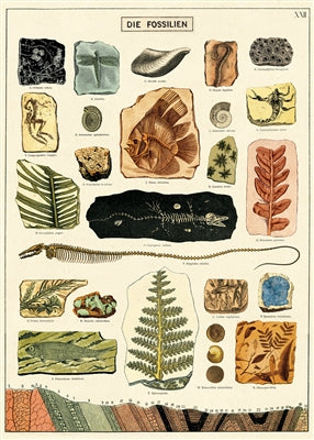 Fossils poster