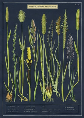 British Grasses and Sedges Poster