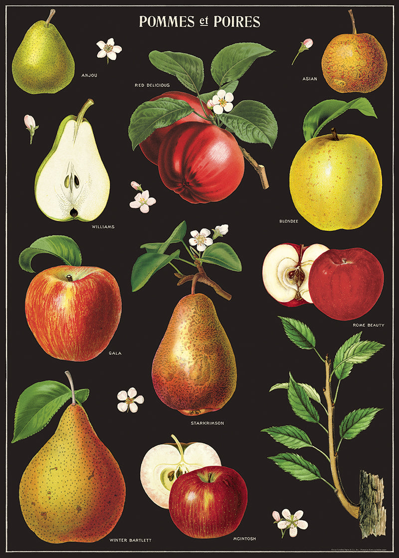 Poster. Apples and Pears. Black.
