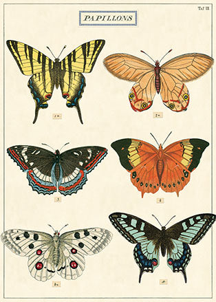 Poster. Papillons