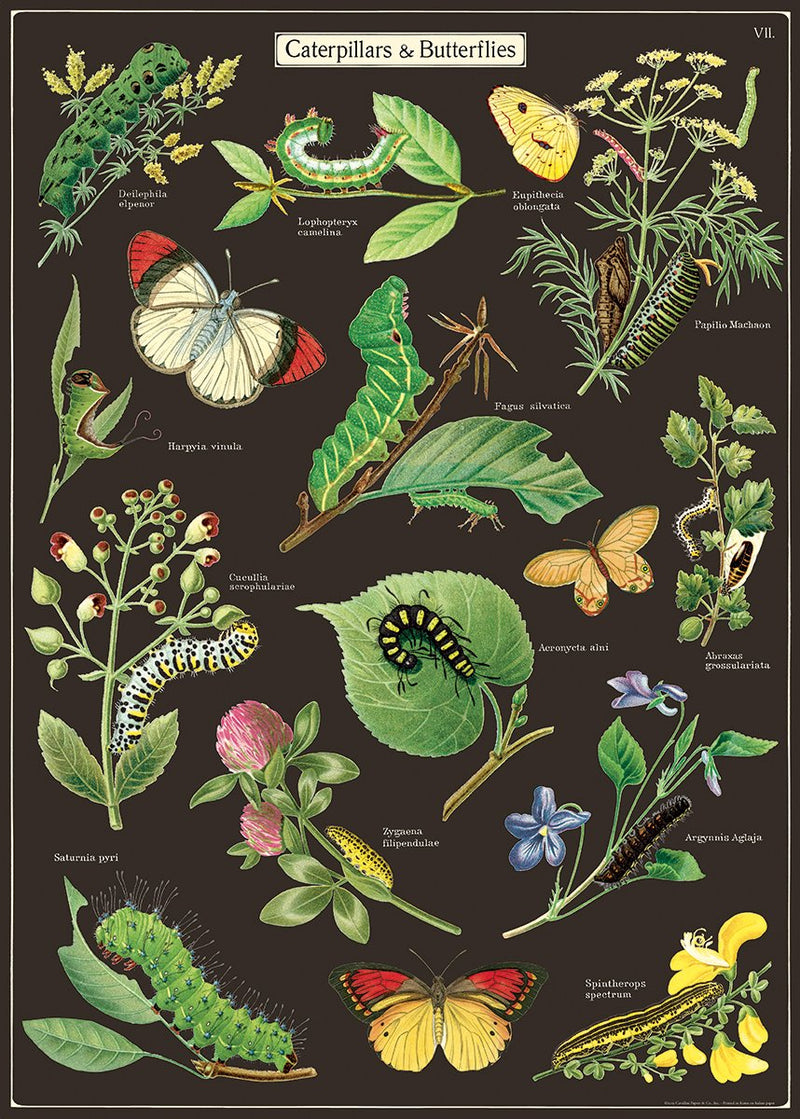 Caterpillars and Butterflies Poster