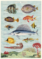 Poster. Tropical Fish