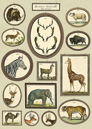 Poster. Natural History Animals