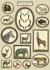 Poster. Animals in Frames