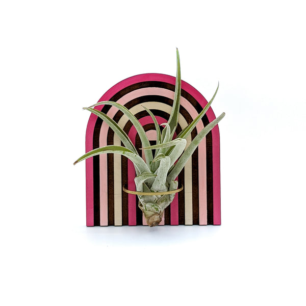 Rainbow Arch Air Plant Holder - Wall Hanging and Magnet