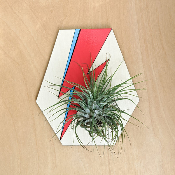 David Bowie Lightning Bolt Air Plant Holder