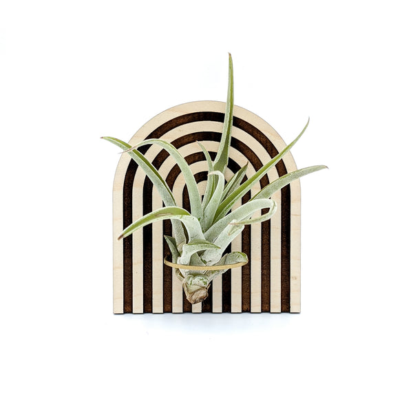 Wood Arch Air Plant Holder - Wall Hanging and Magnet