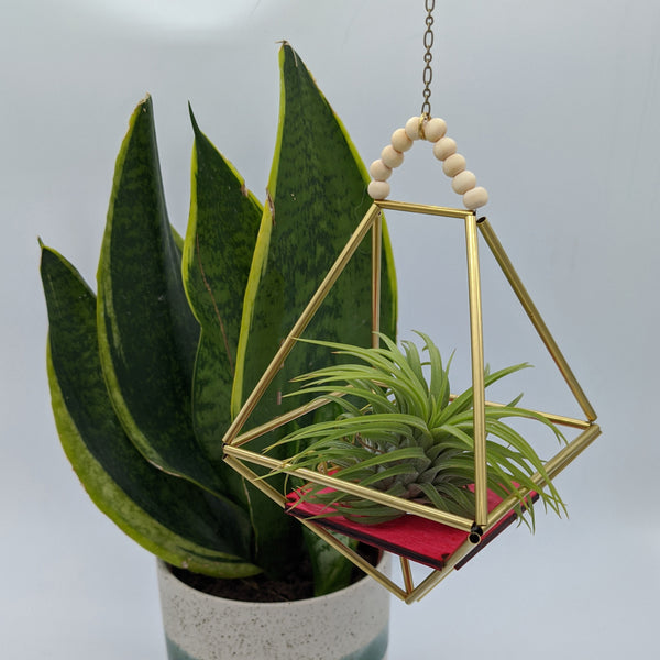 Brass and Wood Diamond Himmeli Planter with Air Plant