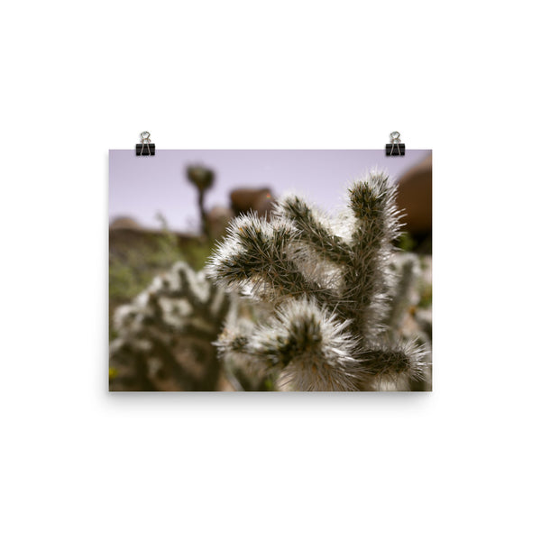 Cactus Close-Up Photo Art Print