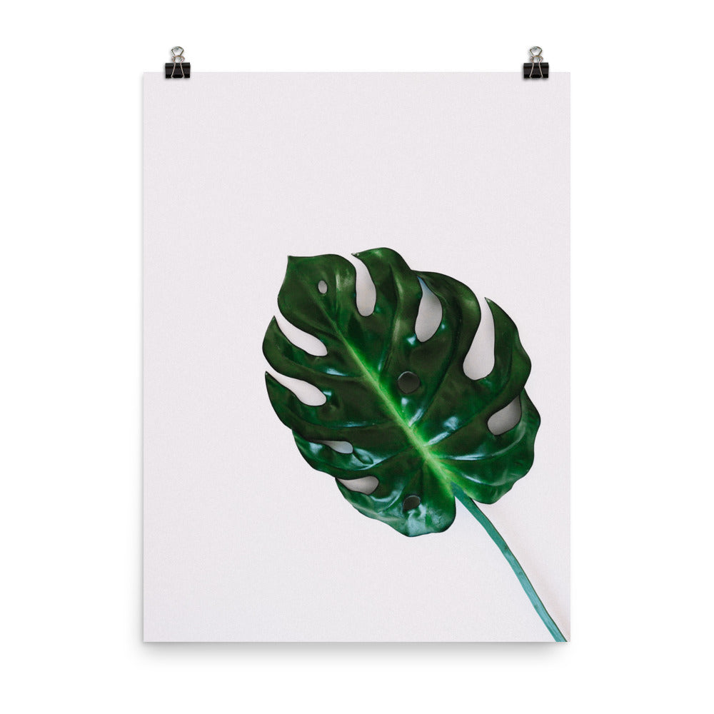Monstera Leaf Photo Art Print
