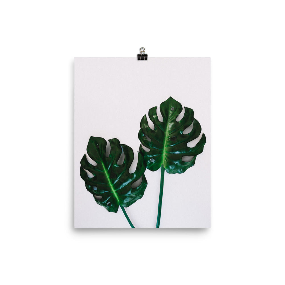 Monstera Leaves Photo Art Print