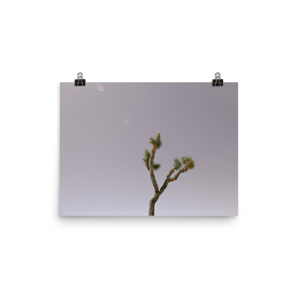 Joshua Tree Photo Art Print
