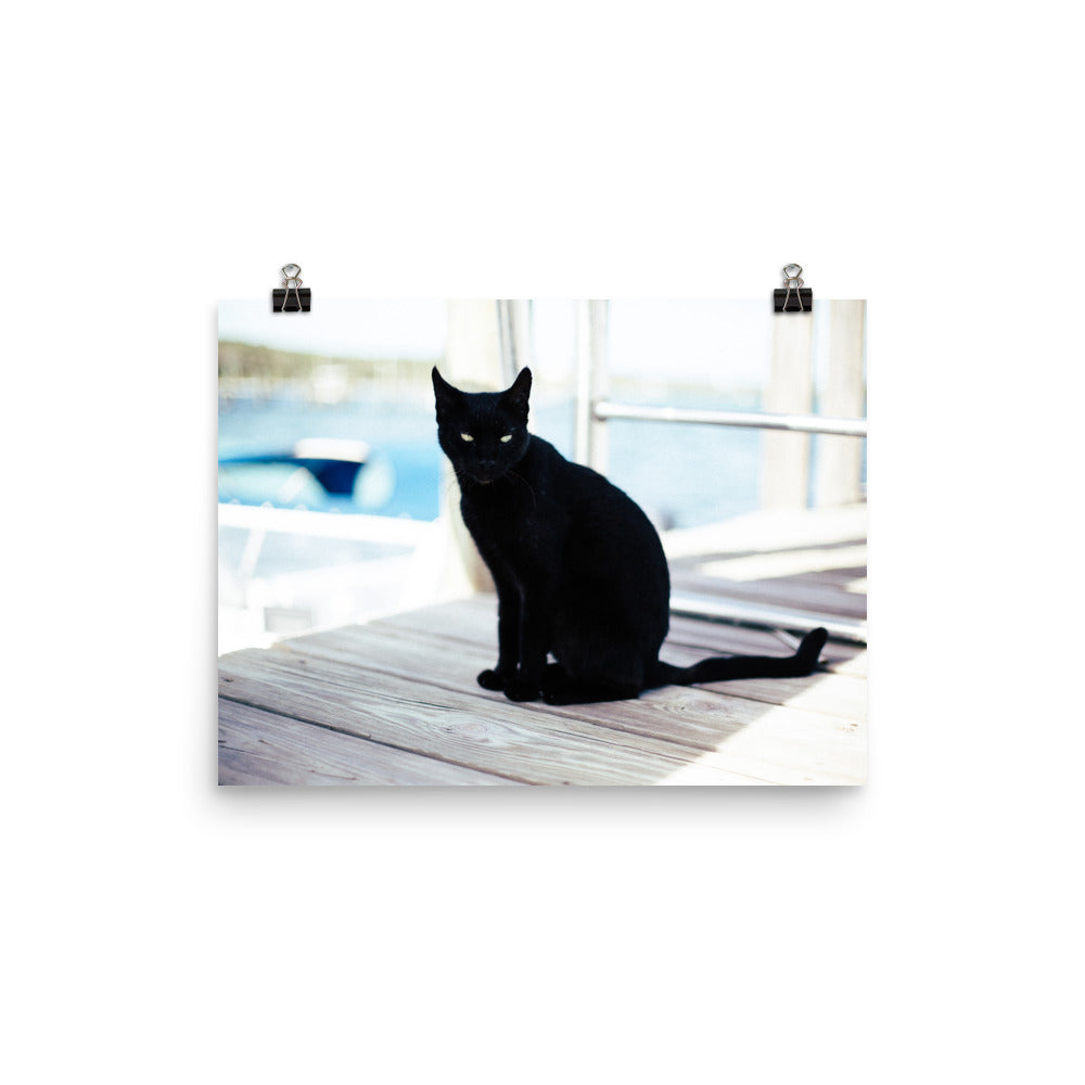 Black Cat On A Dock Photo Art Print