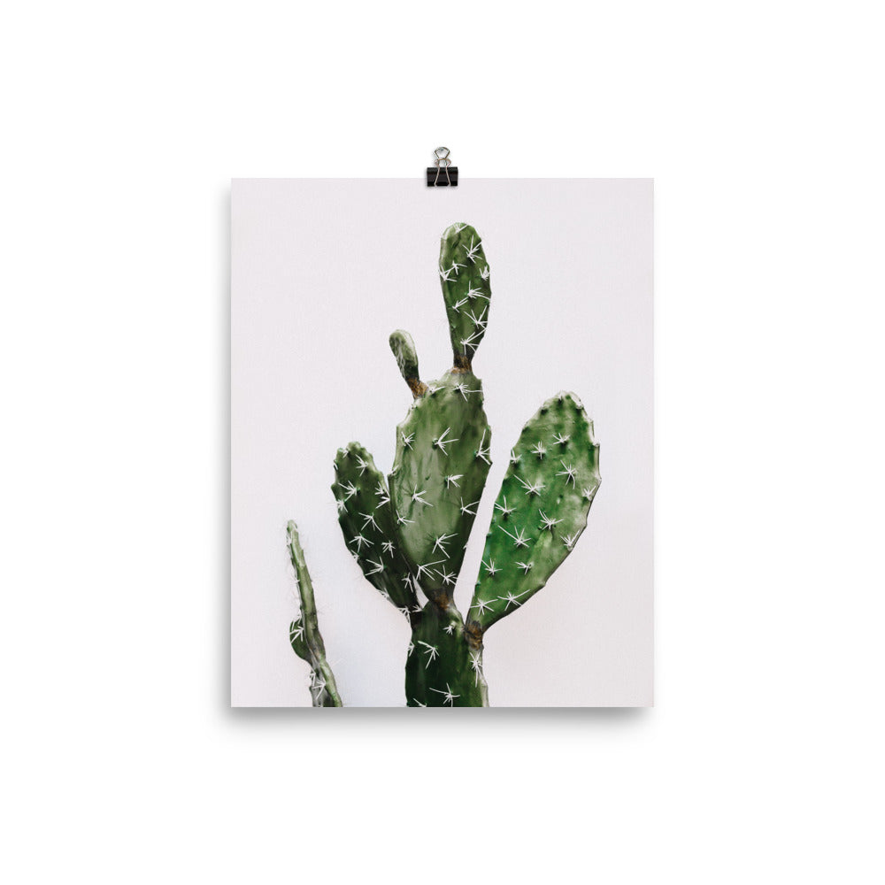 Prickly Pear Cactus Photo Art Print