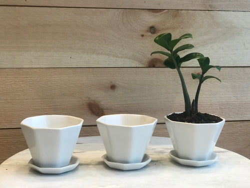 Convivial Mini Octogon Planter