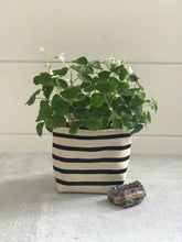 Load image into Gallery viewer, Gray Green Goods Black Stripe Canvas Planter—4""