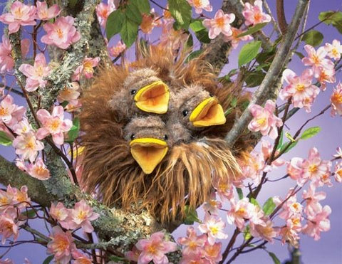 Birds In Nest, Baby Hand Puppet from Folkmanis Puppets