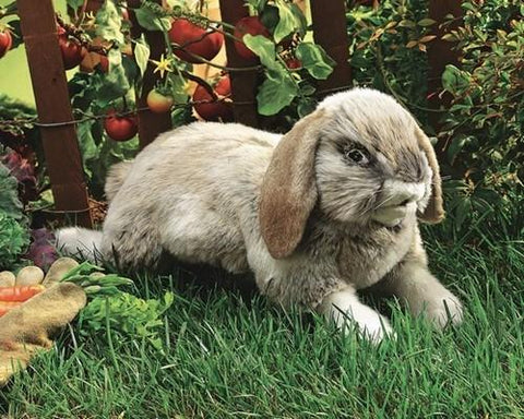 Holland Lop Rabbit Hand Puppet from Folkmanis Puppets