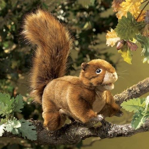Squirrel, Red Hand Puppet from Folkmanis Puppets - AardvarksToZebras.com