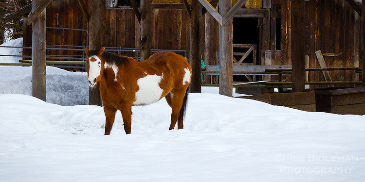 Help Your Horse Manage Their Winter Weight