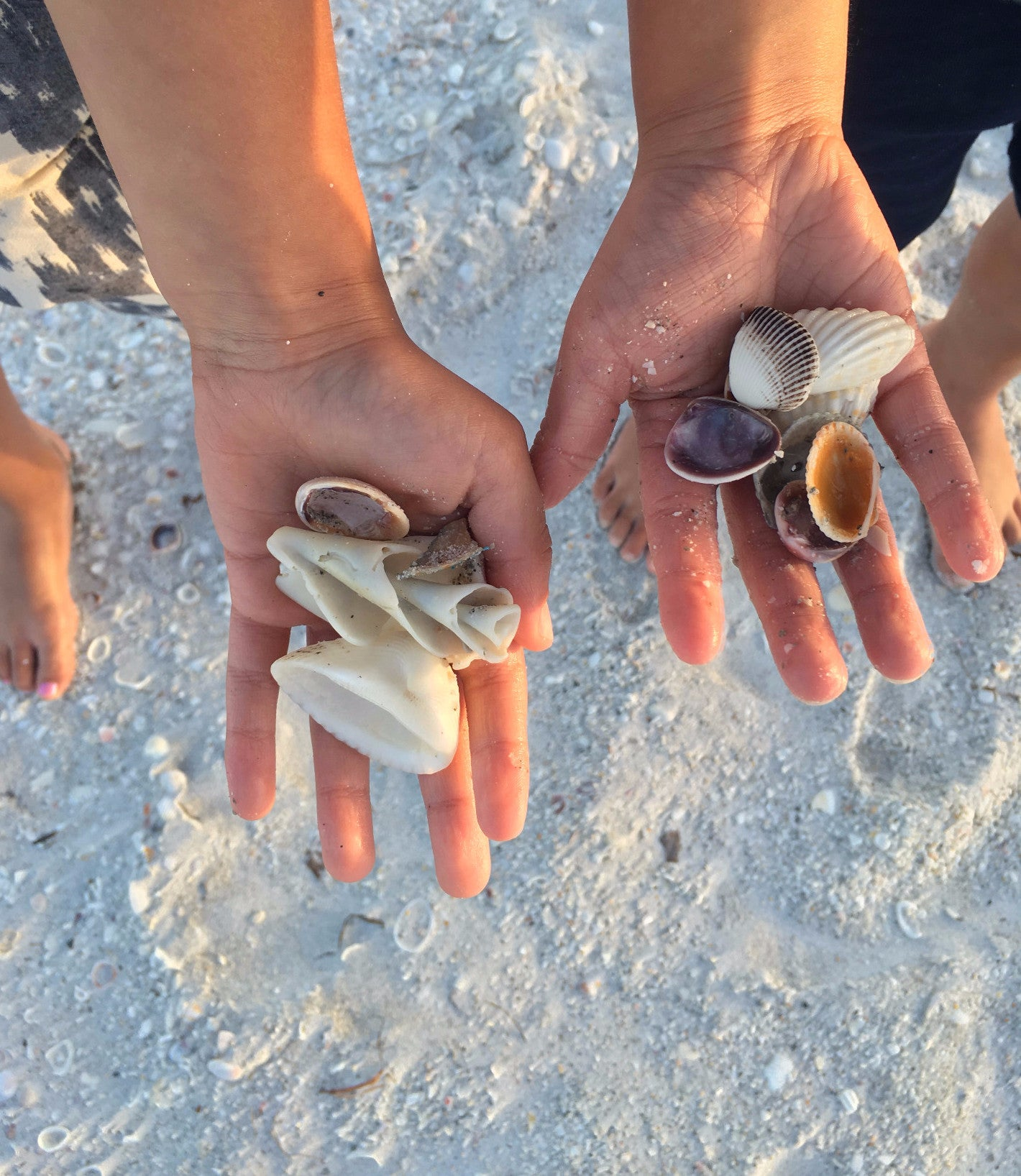 Covet and Lou—The Rambler: Sanibel Island—Shells