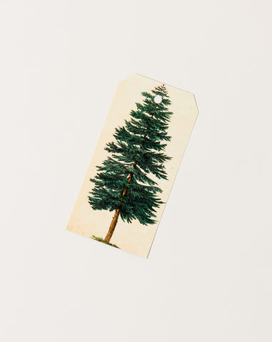 Evergreen Tree Gift Tags