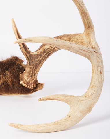 9 Point Deer Antlers