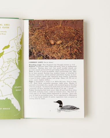 A Field Guide to Birds' Nests