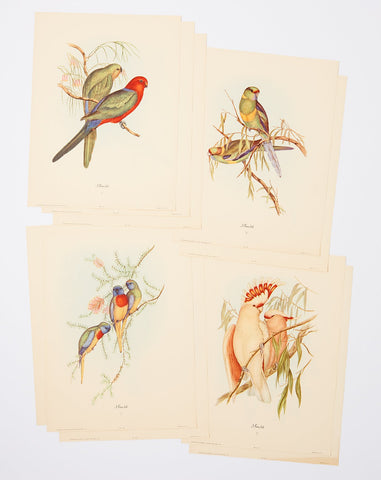 Set of Exotic Birds Prints