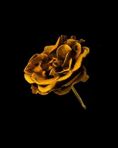Digital print of a bright rose, contrasted against a black background. Piece by James Bryany