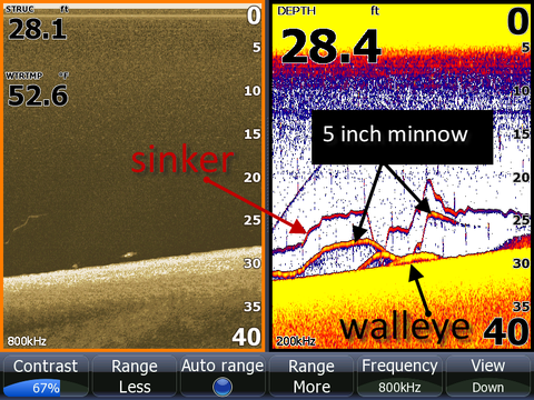 walleye and minnow size on sonar