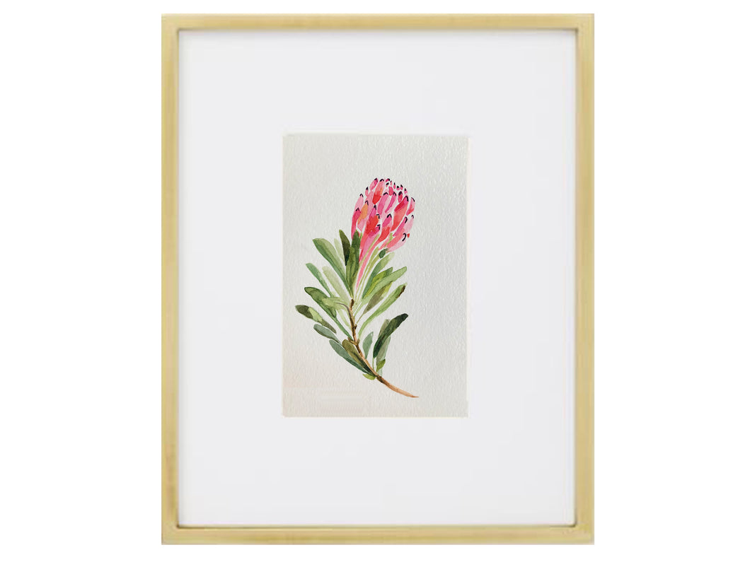 Protea Watercolor (Original)