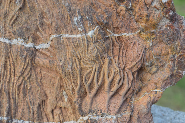 Fossilised Roots