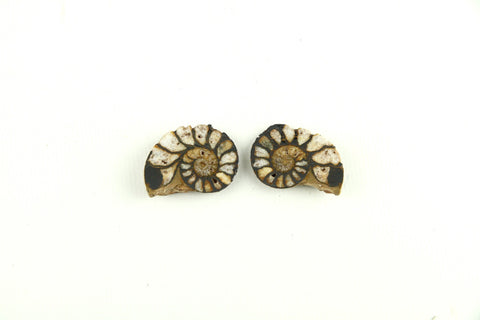 Authentic Ammonite Fossil Cut Polished Pair From Morocco- 1 to 3cm