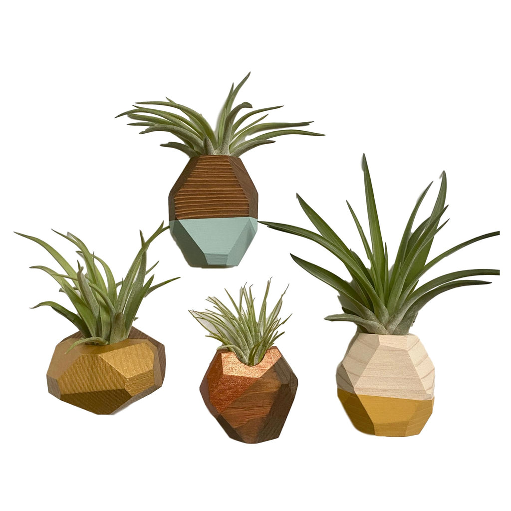 Geo Air Plant + Holder - Giften Market