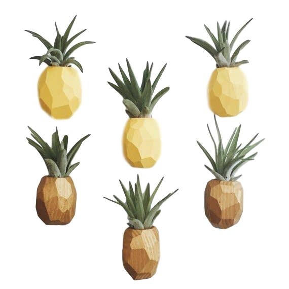 Pineapple Air Plant Magnet - Giften Market