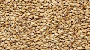 Viking Crystal Malt 50 - per 100g