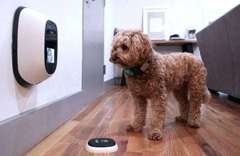 ip cam for pets