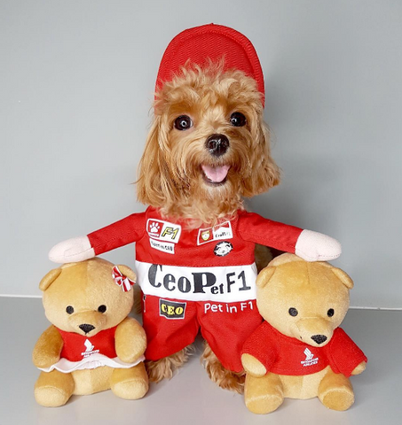 F1 Racer Pet Costume
