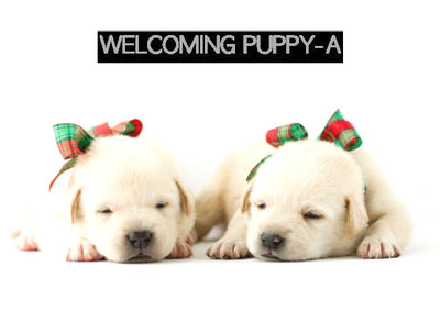 Basic Welcoming Puppy-A - Little Cherry