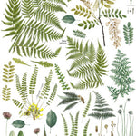Fronds Botanical