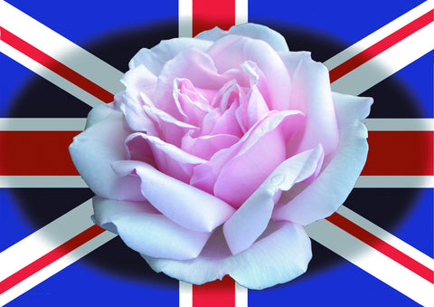 - English Rose Postcard - Pack of 5