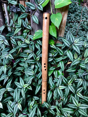 SIDE BLOWN FLUTE - Deep Forest | Bamboo Body - Exotic Scale